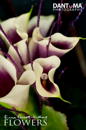 Emma Fawcett-Eustace Flowers (48)